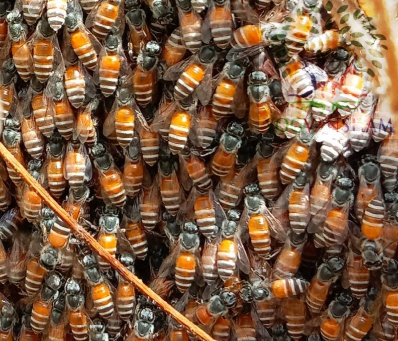 मधुमक्खियों के अनजाने पहलू
